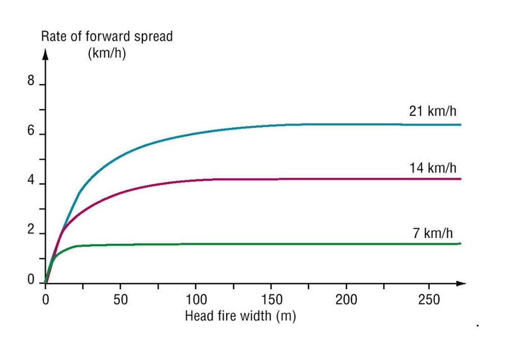 Relationship describing the rate of spread that will be attained by grassfires burning at different head fire widths at increasing wind speeds.